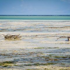 Zanzibar - Joose Digital Photography